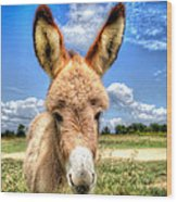 Baby Donkey Wood Print