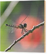 Baby Dragonfly Wood Print