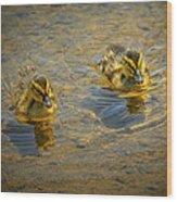 Baby Ducks Wood Print