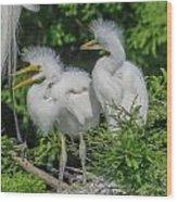 Baby Egrets Wood Print