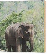 Baby Elephant Chiang Mai, Thailand Wood Print