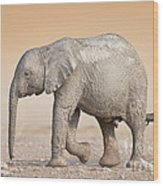 Baby Elephant  Wood Print by Johan Swanepoel
