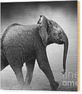 Baby Elephant Running Wood Print