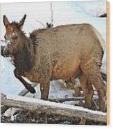 Baby Elk In Yellowstone Wood Print