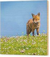 Baby Fox In Field Of Flowers Wood Print