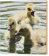 Baby Geese Wood Print by Diane Rada