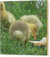 Baby Geese-mayer Lake-savannah Wood Print