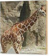 Baby Giraffe 4 Wood Print