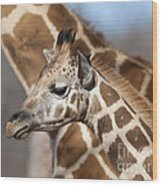 Baby Giraffe And Mother Wood Print