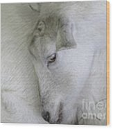 Baby Goats Wood Print