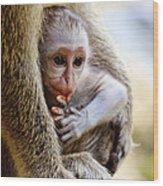 Baby Green Monkey - Barbados Wood Print