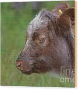 Baby Highland Cow Wood Print