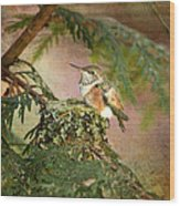 Baby Hummingbird In The Forest Wood Print