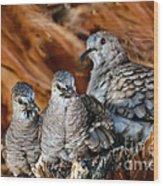 Baby Inca Doves Wood Print