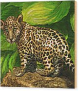 Baby Jaguar Wood Print
