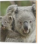 Baby Koala With Mom Wood Print