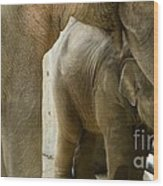 Baby Lily Elephant Wood Print