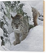 Baby Lynx Hiding In A Snowy Pine Forest Wood Print