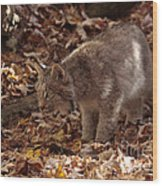 Baby Lynx Hunting In An Autumn Forest Wood Print