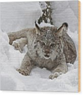 Baby Lynx In A Winter Snow Storm Wood Print