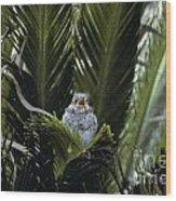 Baby Mockingbird Wood Print