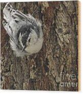 Baby Nuthatch Wood Print