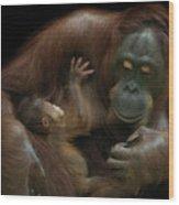 Baby Orangutan & Mother Wood Print