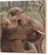 Baby Orphans Explore Imenti Tsavo Kenya Wood Print