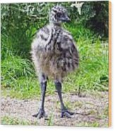 Baby Ostrich In The City Wood Print