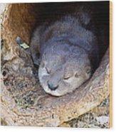 Baby Otter Wood Print