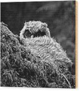 Baby Owl 3 Wood Print