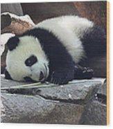Baby Panda Wood Print