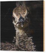 Baby Peacock Wood Print