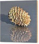 Baby Pine Cone Wood Print