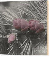 Baby Pine Cones In Partial Color Wood Print