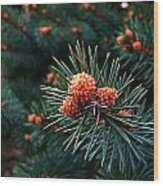 Baby Pinecones Wood Print by Julie Dant
