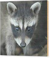 Baby Racoon Wood Print