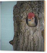 Baby Red Bellied Woodpecker Wood Print