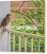 Baby Robin - Such A Big World Wood Print