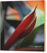 Baby Rubber Tree Wood Print