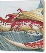 Baby Scarlet Spotted Dragon Wood Print