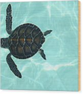 Baby Sea Turtle Wood Print