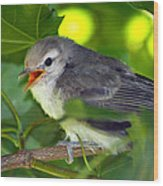 Baby Sparrow In The Maple Tree Wood Print