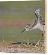 Baby Stilt Stretching Its Wings Wood Print