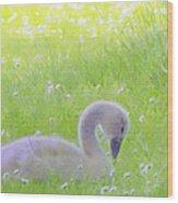 Baby Swans Enjoy A Summer Day Wood Print