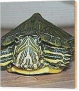 Baby Turtle Straight On Wood Print