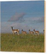 Babysitting - Antelope - Johnson County - Wyoming Wood Print
