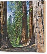 Bachelor And Three Graces In Mariposa Grove In Yosemite National Park-california Wood Print