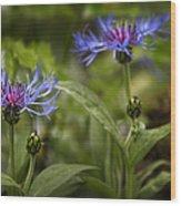 Bachelor Buttons - Flowers Wood Print