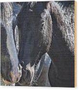 Bachelor Stallions - Pryor Mustangs Wood Print